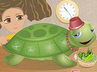 Turtle Pet