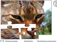 Jigsaw: Closeup Cat