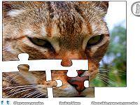 Jigsaw: Closeup Cat